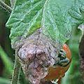 Astuces pour insectes