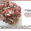 Hortensia rosé