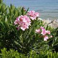 Crète 2010 040