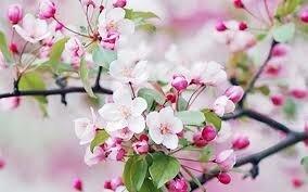"""Résultat de recherche d'images pour """"photos fleurs de printemps"""""""