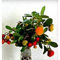 Fruits d'arbousier(1)